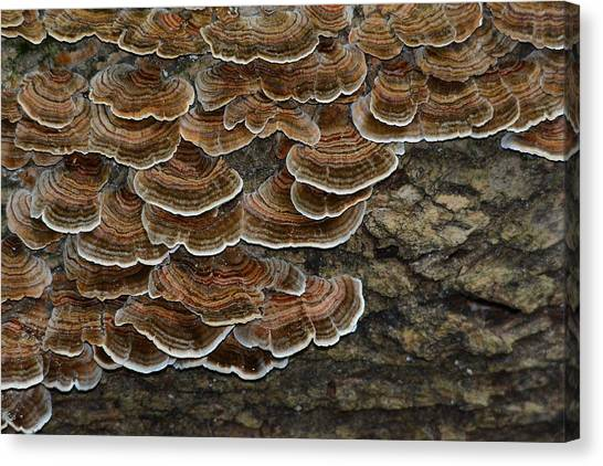 Forest Floor Number 3 Canvas Print