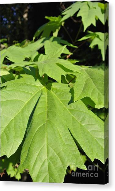 Forest Greens Canvas Print