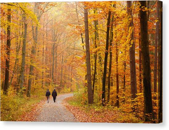 Baden Wuerttemberg Canvas Print - Forest In Fall - Trees With Beautiful Autumn Colors by Matthias Hauser