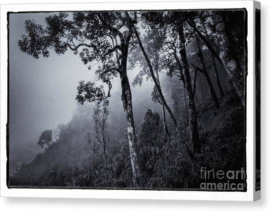 Foggy Forests Canvas Print - Forest In The Fog by Setsiri Silapasuwanchai