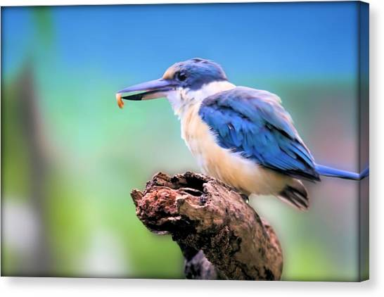 Forest Kingfisher With Breakfast Canvas Print