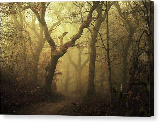 Foggy Forests Canvas Print - Forest by Leif L?ndal