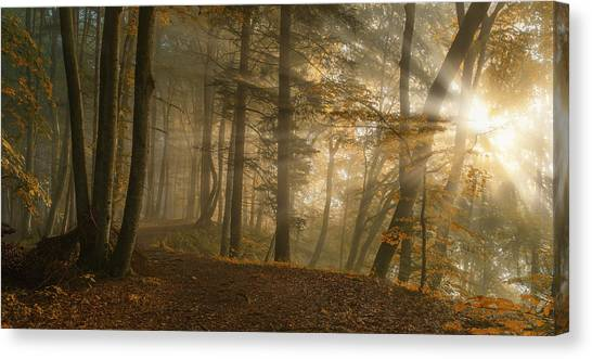 Sun Rays Canvas Print - Forest Light by Norbert Maier