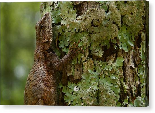 Forest Lizard 2 Canvas Print