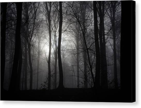 Forest Mist Canvas Print by Mark David