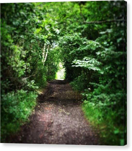 Forest Paths Canvas Print - Forest Walk by Monika Puffpaff