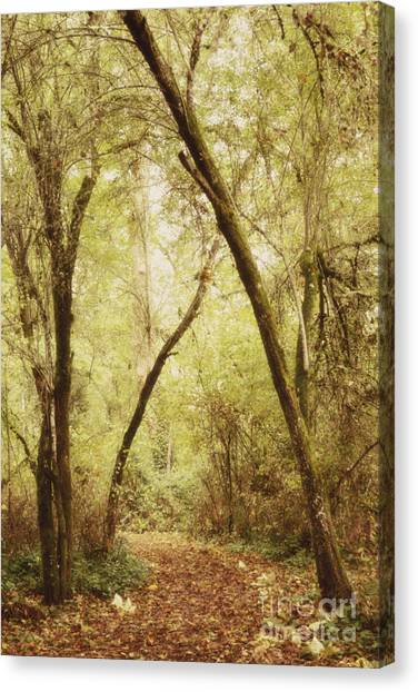 Forest Paths Canvas Print - Forest Path 1 by Rebecca Cozart