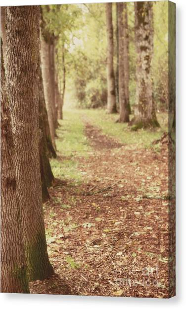 Forest Paths Canvas Print - Forest Path 2 by Rebecca Cozart