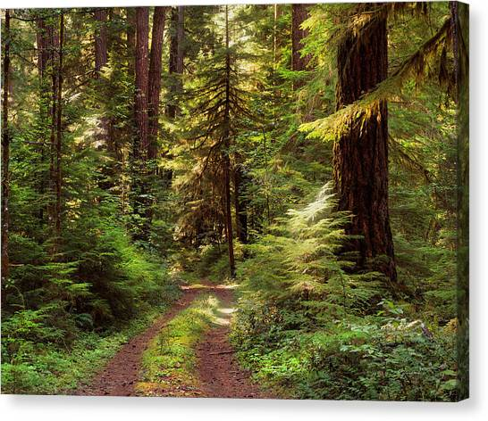 Old Country Roads Canvas Print - Forest Path 4 by Leland D Howard