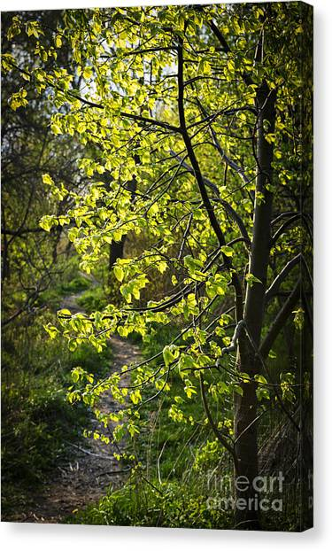 Forest Paths Canvas Print - Forest Path by Elena Elisseeva
