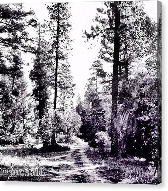 Forest Paths Canvas Print - Forest Path by Star Rodriguez