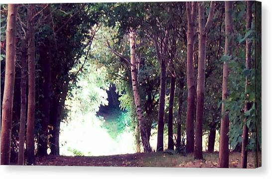 Forest Paths Canvas Print - Forest Path Walkway by Candy Floss Happy