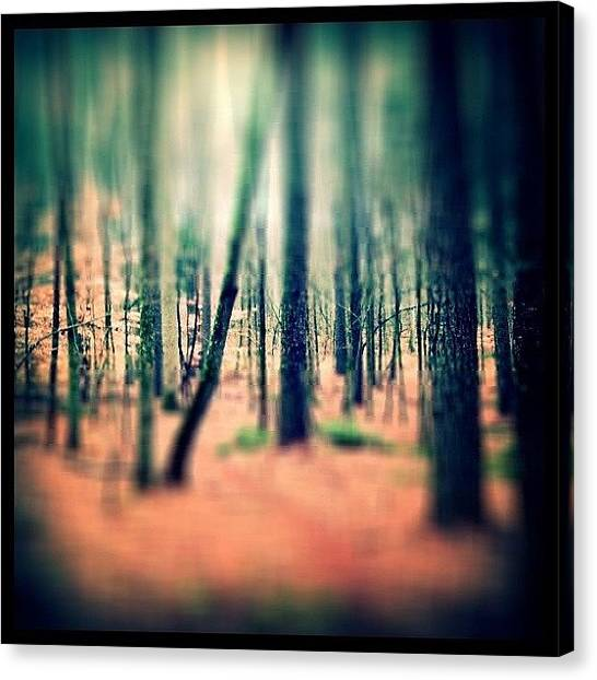 Orange Tree Canvas Print - Forest by Sarah Skeen