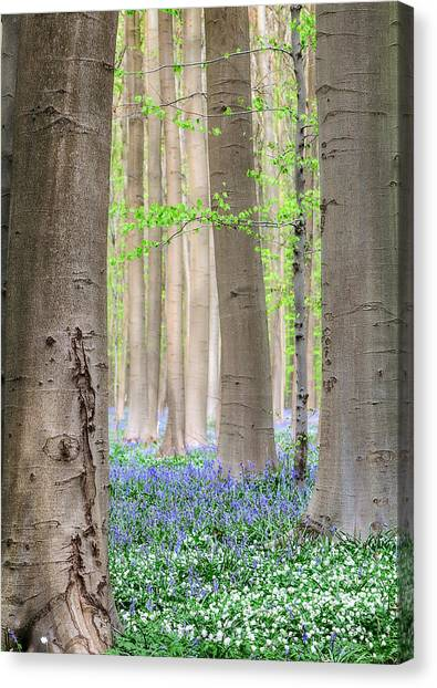 Forest Spring Flowers  Canvas Print