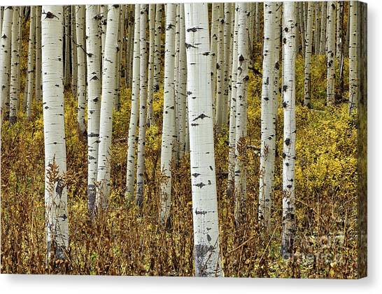 Forest Through The Trees Canvas Print