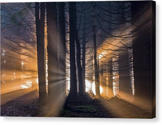 Bright Canvas Print - Forest by Tom Pavlasek