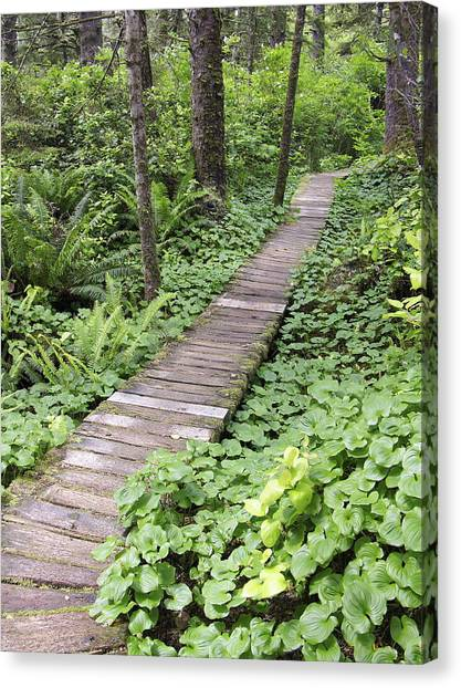Forest Paths Canvas Print - Forest Walkway by Tony Craddock/science Photo Library