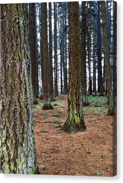 Mossy Forest Canvas Print - Forest's End by Andrew  Stoffel