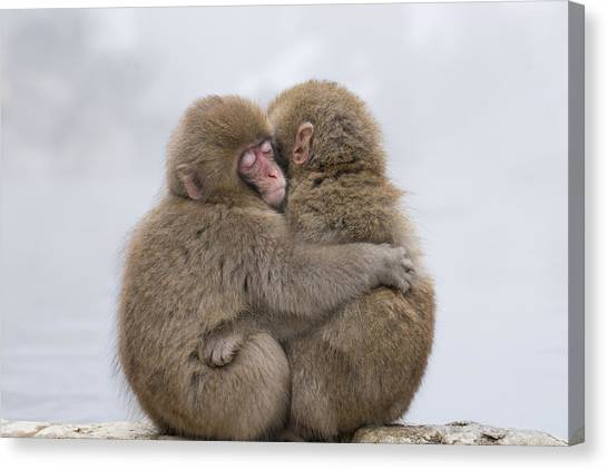 Monkeys Canvas Print - Forever Friends by Takeshi Marumoto
