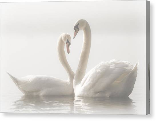 Swan Canvas Print - Forever by Monika Schwager