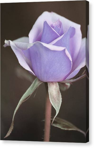 Forever Canvas Print