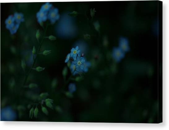 Forget Me Not 5 Canvas Print