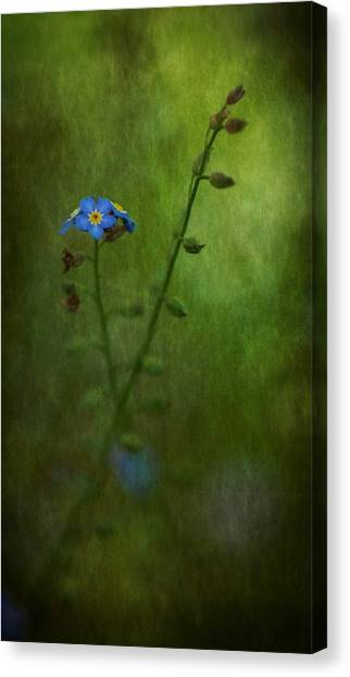 Forget Me Not Light Space Time Botanicals Art Exhibition 2014 Special Merit Award Canvas Print