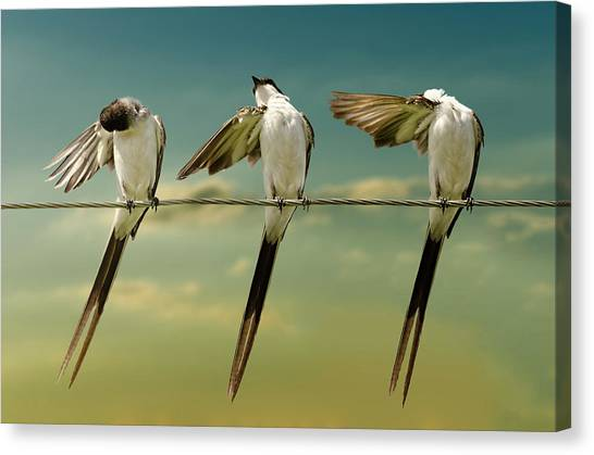 Flycatchers Canvas Print - Fork Tailed by Chechi Peinado