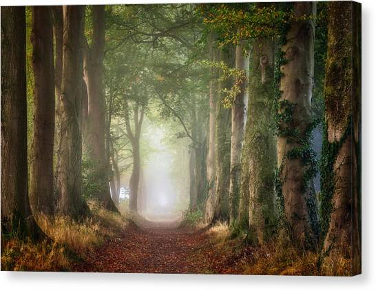 Foggy Forests Canvas Print - Forward by Ellen Borggreve