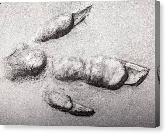 Toes Canvas Print - Fossil Dinosaur Track by Paul D Stewart