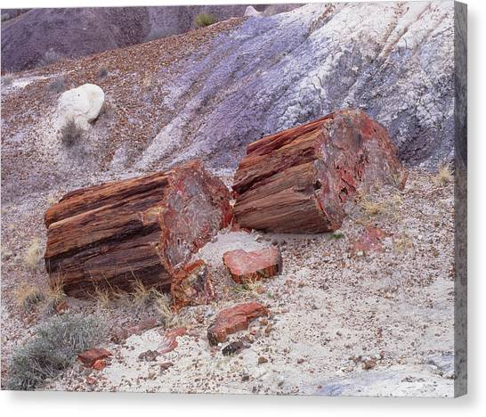 Petrified Forest Canvas Print - Fossilised Trees In Petrified Forest National Park by Simon Fraser/science Photo Library