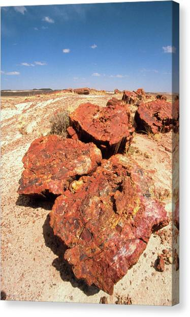 Petrified Forest Canvas Print - Fossilised Trees In Petrified Forest National Park by Tony Craddock/science Photo Library
