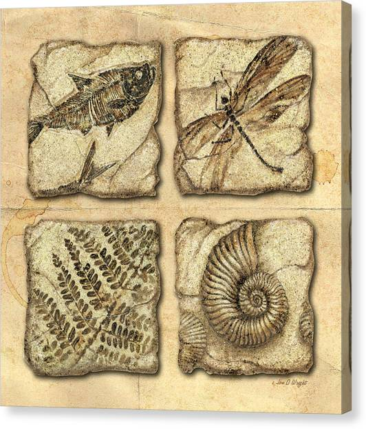 Prehistoric Canvas Print - Fossils by JQ Licensing