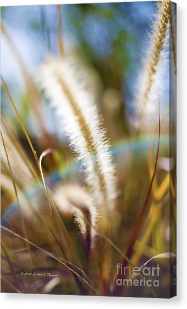 Fountain Grass Canvas Print