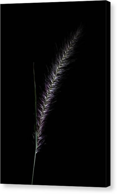 Fountain Grass Spike Canvas Print