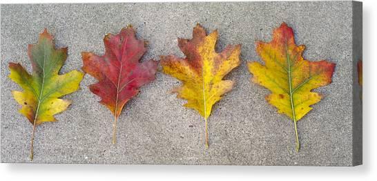 Four Autumn Leaves Canvas Print