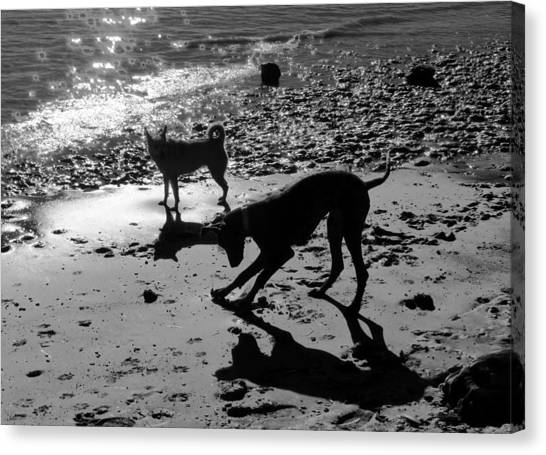 Dog Magic Canvas Print