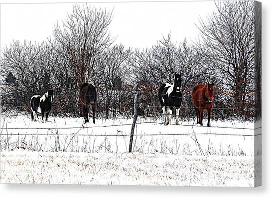 Four Horses Canvas Print