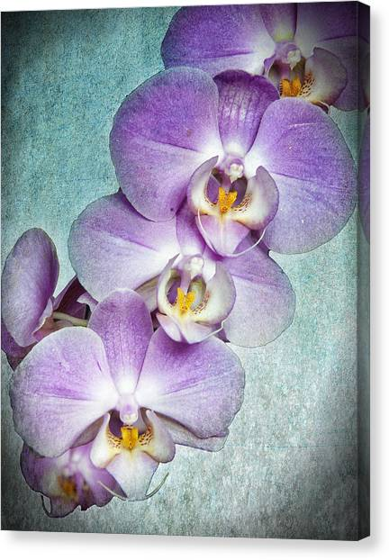 Four Little Orchids Canvas Print