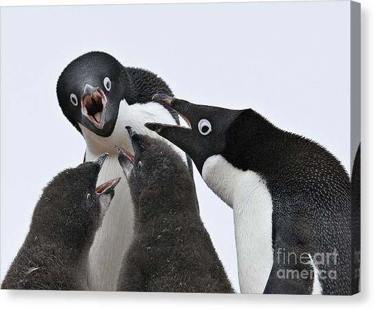 Adele Canvas Print - Four Penguins by Carol Walker