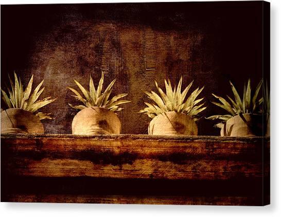 San Miguel De Allende Canvas Print - Four Potted Plants by Carol Leigh