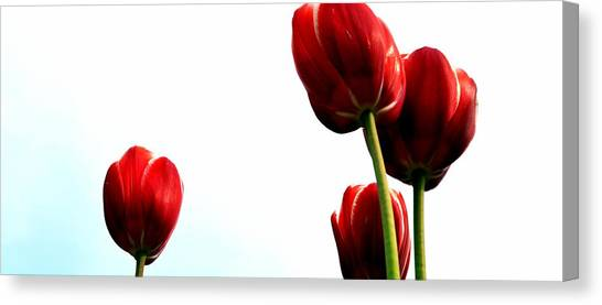 Four Red Tulips Canvas Print