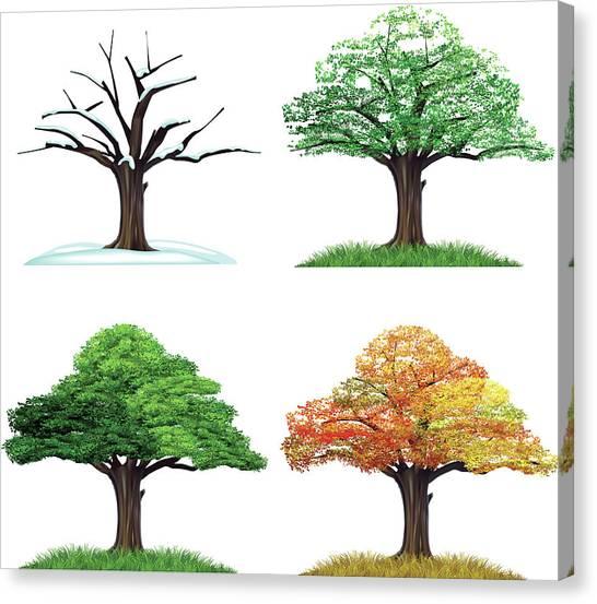 Four Season Tree Canvas Print by Sceka