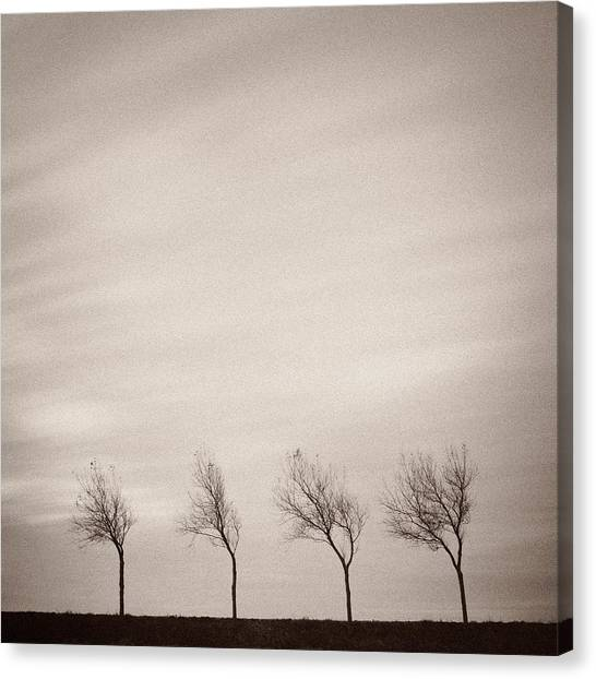 Barren Canvas Print - Four Trees by Dave Bowman