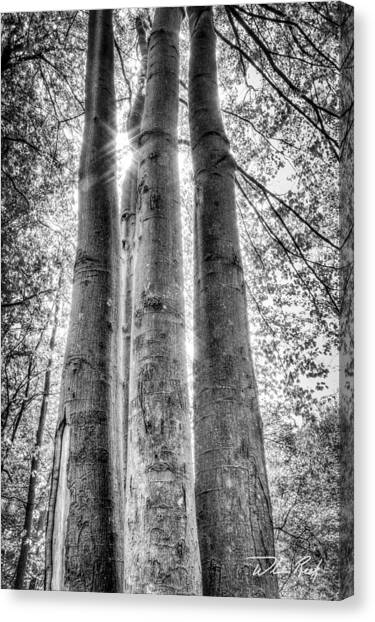 Four Trunks Canvas Print by William Reek