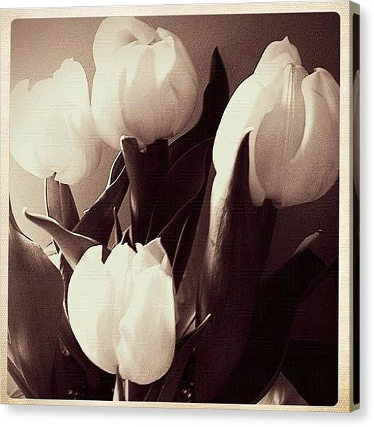 Bouquet Canvas Print - Four Tulips  by Stefanie Roberts