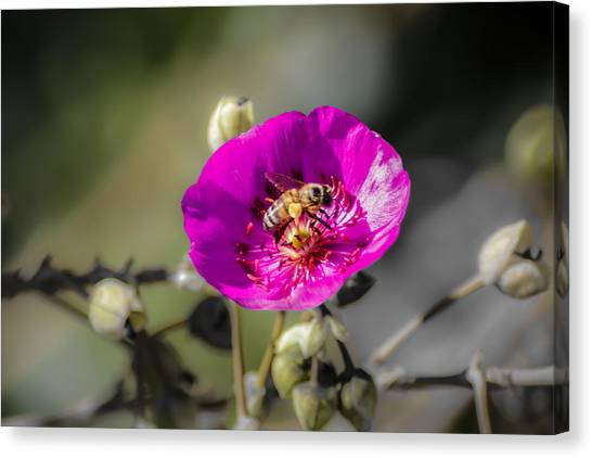Fower And Bee Canvas Print