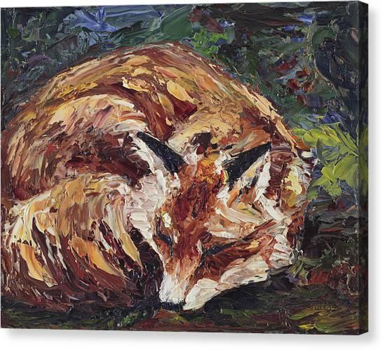 Fox Asleep Canvas Print
