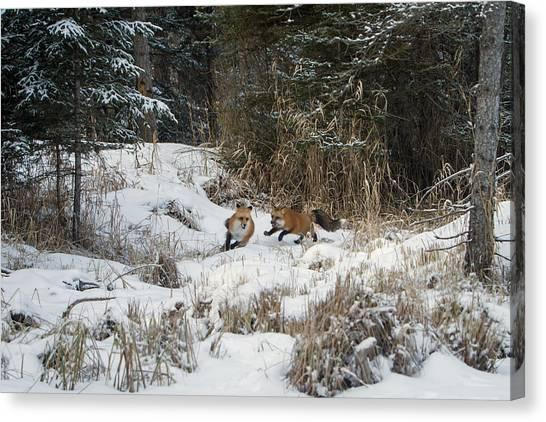 Fox Hollow Canvas Print