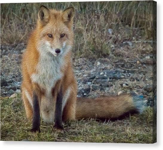 Fox In Oil Canvas Print